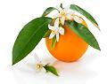 オレンジ花水(オレンジの花)のイメージ
