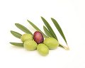 オリーブ種子皮粉のイメージ