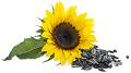 ヒマワリ種子油(ヒマワリ)のイメージ